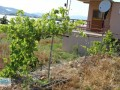 gazipasa-for-sale-field-7-acres-cobanlar-farm-small-1