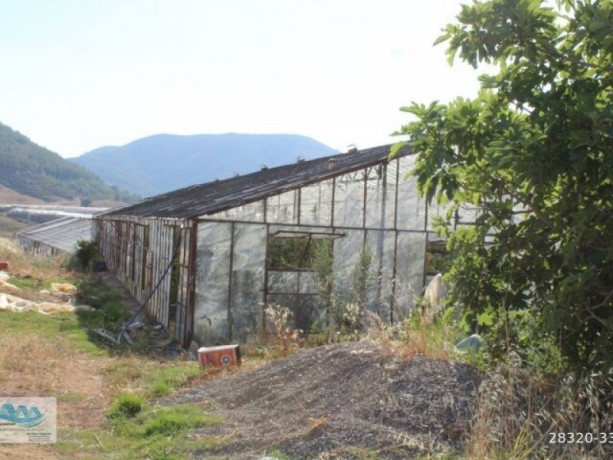 gazipasa-for-sale-field-7-acres-cobanlar-farm-big-8