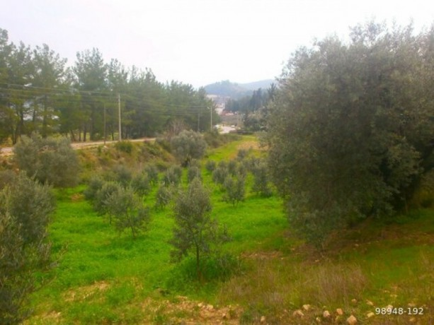 7454-m2-zero-olive-garden-on-the-road-just-outside-oymapinar-big-11
