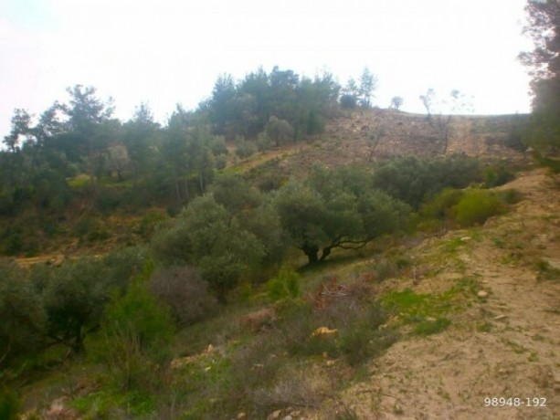 7454-m2-zero-olive-garden-on-the-road-just-outside-oymapinar-big-7