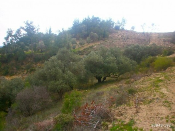 7454-m2-zero-olive-garden-on-the-road-just-outside-oymapinar-big-6