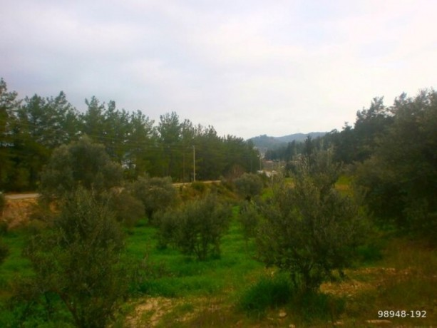 7454-m2-zero-olive-garden-on-the-road-just-outside-oymapinar-big-1