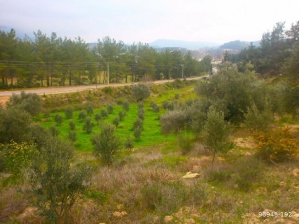 7454-m2-zero-olive-garden-on-the-road-just-outside-oymapinar-big-3