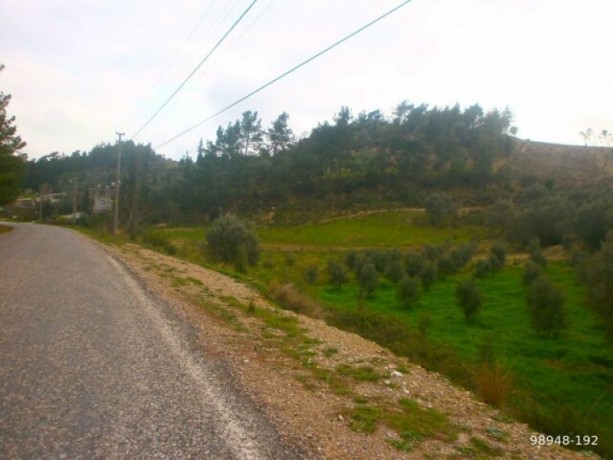 7454-m2-zero-olive-garden-on-the-road-just-outside-oymapinar-big-4