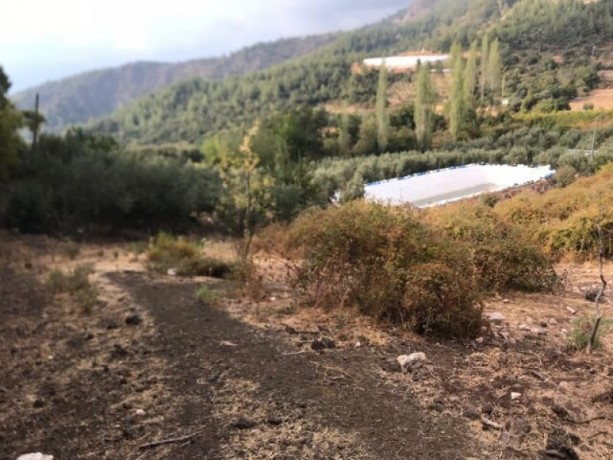 field-for-sale-in-kumluca-guzoren-village-3500m2-big-2