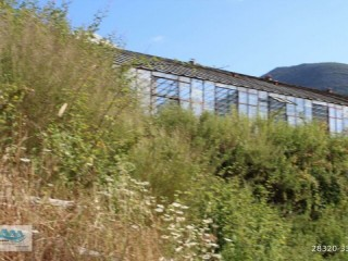 GAZIPAŞA FIELD FOR SALE 8 ACRES FIELD AND HOUSE BEYREBUCAK