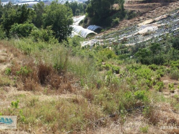 gazipasa-field-for-sale-8-acres-field-and-house-beyrebucak-big-1