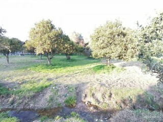 10 ACRES OF LAND IN DEMIRTAŞ CENTER 1 ACRE OF SHARES FOR SALE