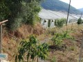 antalya-gazipasa-for-sale-field-7000-m2-small-3