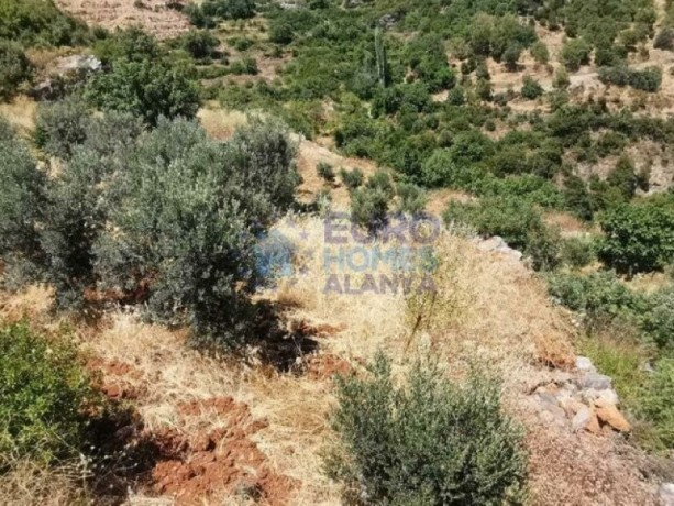 full-sea-nature-view-in-alanya-yenice-village-2655-m2-olive-garden-land-big-5
