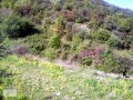 land-for-sale-in-alanya-from-the-owner-960-m2-in-yesiloz-sea-sees-small-8