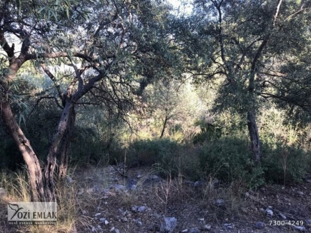 26000-m2-antalya-aksu-karaoz-house-and-land-for-sale-in-the-village-big-4