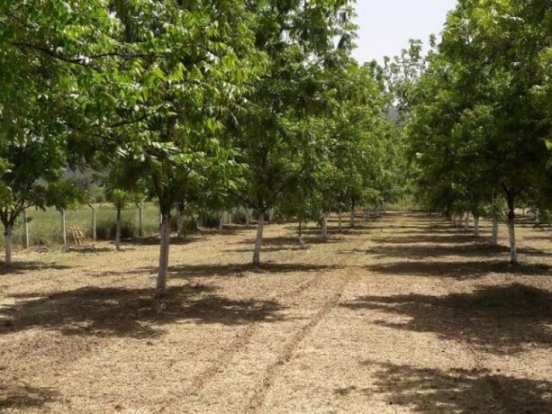 groomed-pikan-walnut-garden-for-sale-in-karaoz-big-6