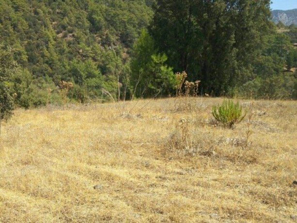 olympos-beach-historic-13700-m2-detached-field-for-sale-big-2
