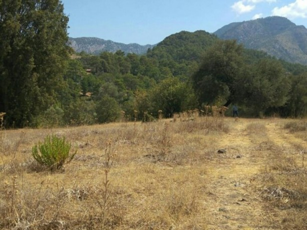 olympos-beach-historic-13700-m2-detached-field-for-sale-big-4