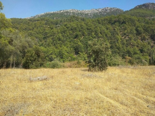 olympos-beach-historic-13700-m2-detached-field-for-sale-big-5