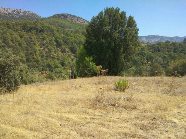 olympos-beach-historic-13700-m2-detached-field-for-sale-big-1