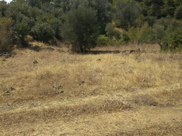 olympos-beach-historic-13700-m2-detached-field-for-sale-big-3