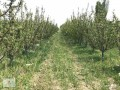 a-profitable-and-profitable-apple-garden-and-field-small-2