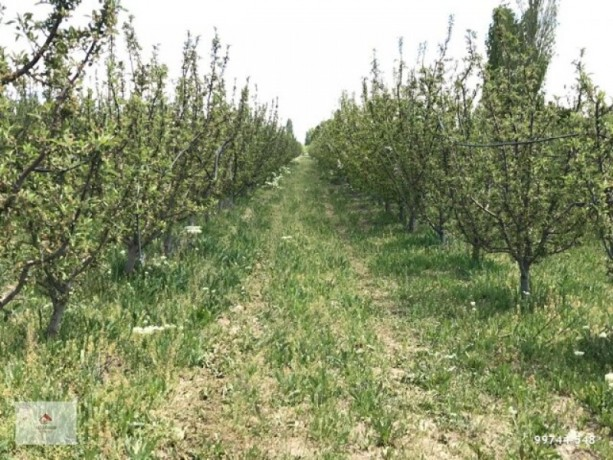 a-profitable-and-profitable-apple-garden-and-field-big-2