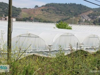 YEŞILÖZ 3 ACRES BANANA GREENHOUSE FOR SALE