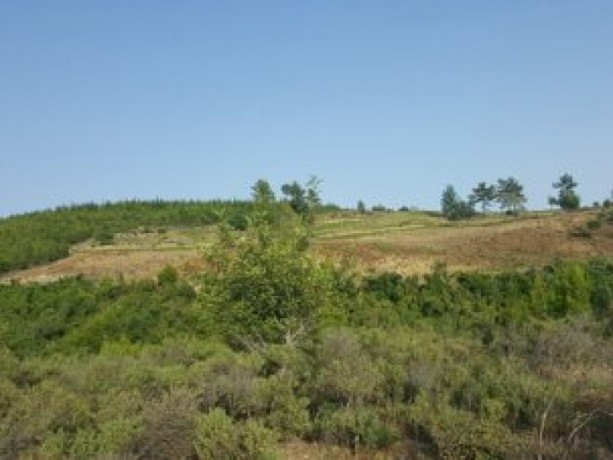 field-for-sale-antalya-manavgat-villages-yaylaalan-village-41000-m2-big-8