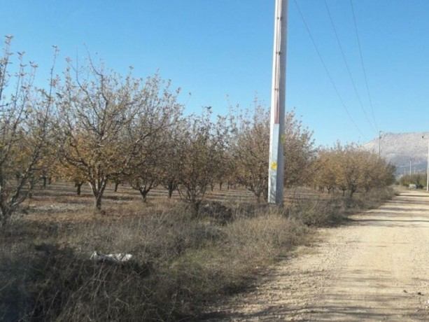 apple-orchard-for-sale-8800-m2-buy-cheap-turkey-farm-property-big-5