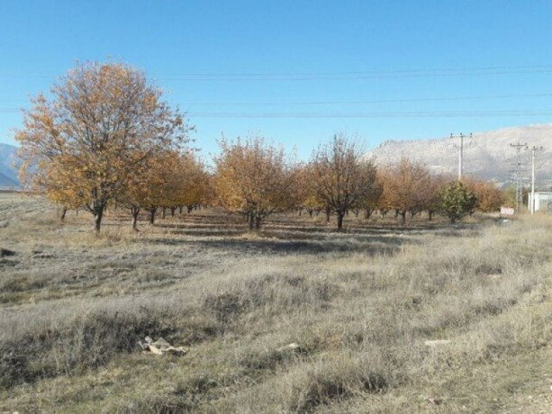 apple-orchard-for-sale-8800-m2-buy-cheap-turkey-farm-property-big-1