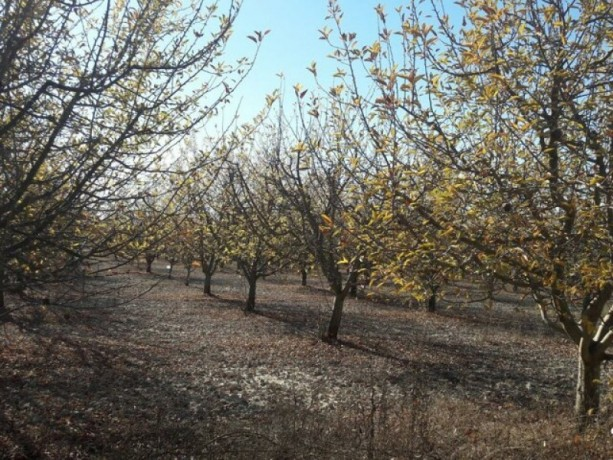 apple-orchard-for-sale-8800-m2-buy-cheap-turkey-farm-property-big-4