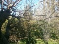 orange-garden-for-sale-antalya-manavgat-villages-karaoz-village-small-6