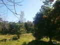 orange-garden-for-sale-antalya-manavgat-villages-karaoz-village-small-3