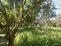 orange-garden-for-sale-antalya-manavgat-villages-karaoz-village-small-0