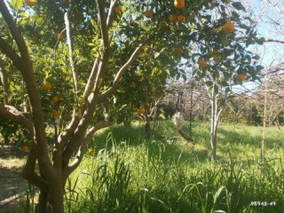 Orange Garden For Sale Antalya Manavgat Villages Karaoz Village