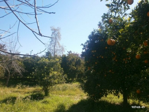 orange-garden-for-sale-antalya-manavgat-villages-karaoz-village-big-3
