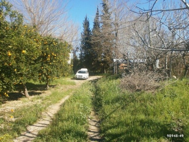 orange-garden-for-sale-antalya-manavgat-villages-karaoz-village-big-4