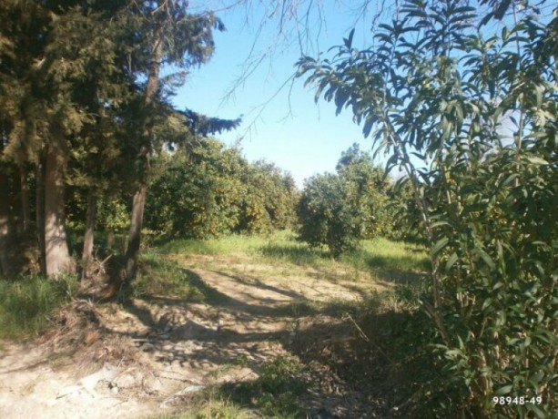 orange-garden-for-sale-antalya-manavgat-villages-karaoz-village-big-2