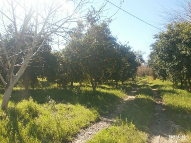 orange-garden-for-sale-antalya-manavgat-villages-karaoz-village-big-5